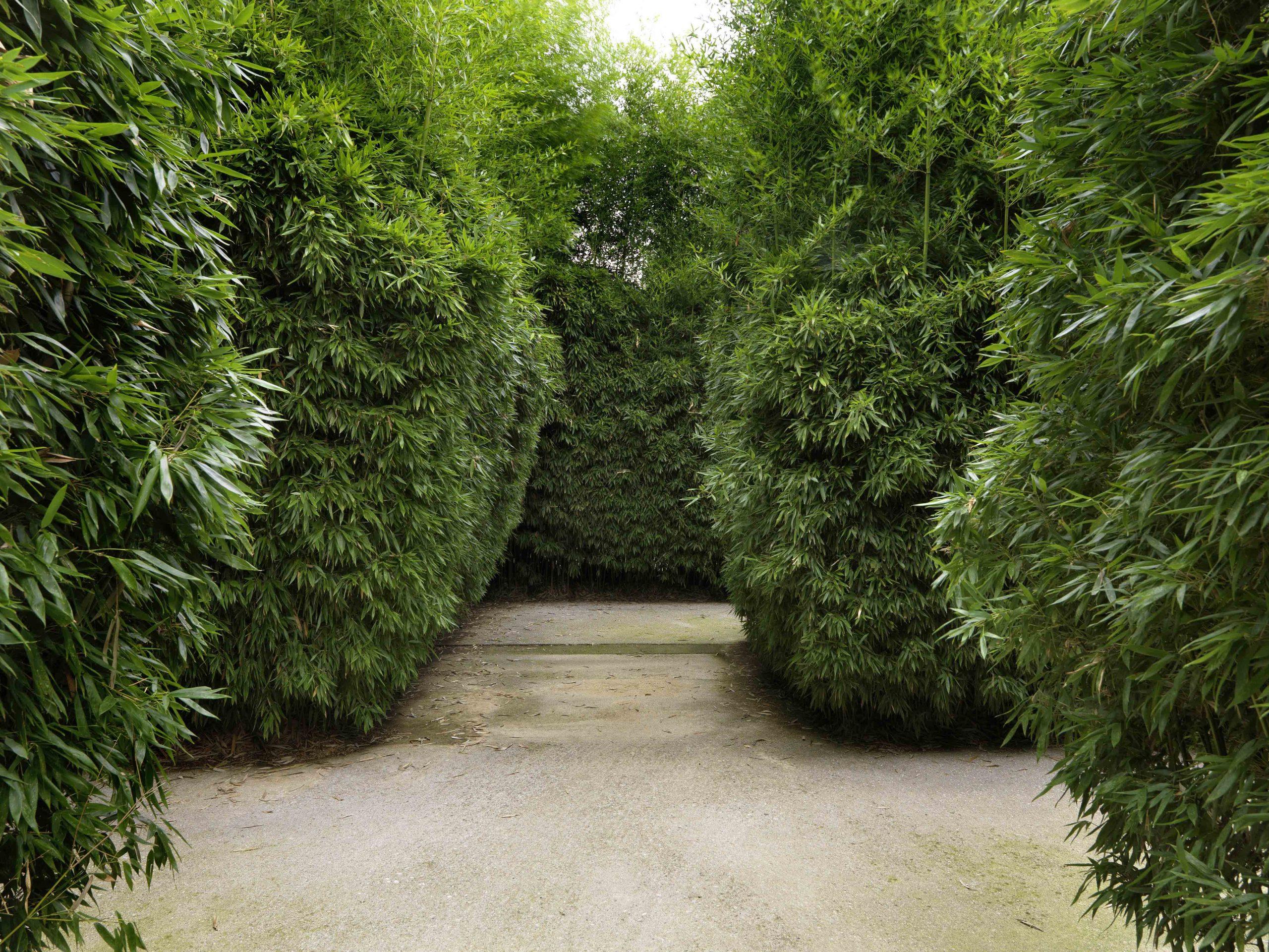 Labirinto della Masone - Scorci interni del Labirinto © Massimo ListriLQ