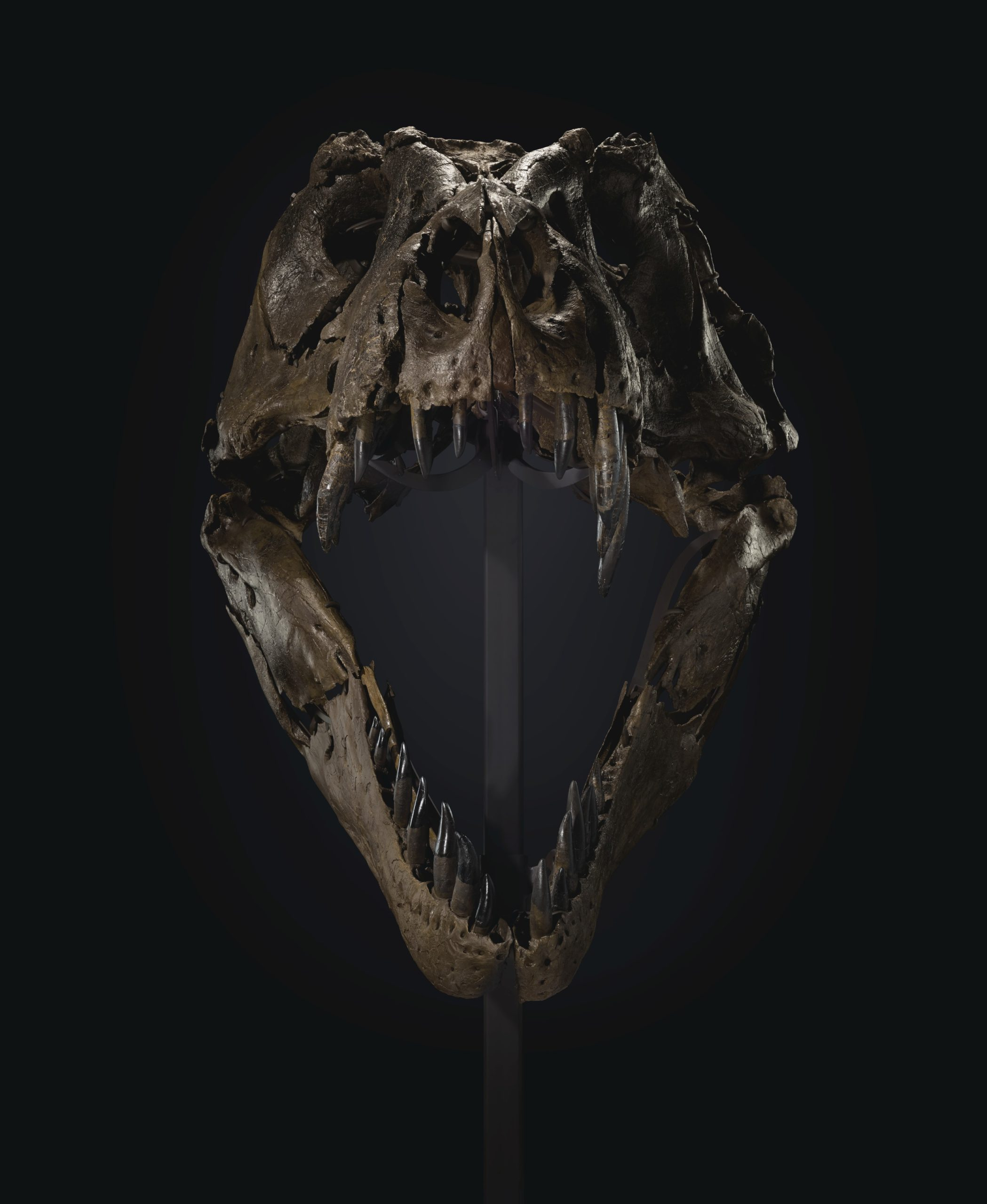 T-Rex STAN - TYRANNOSAURUS REX   SOUTH DAKOTA, USA Estimate USD 6,000,000 - USD 8,000,000 © Christie's