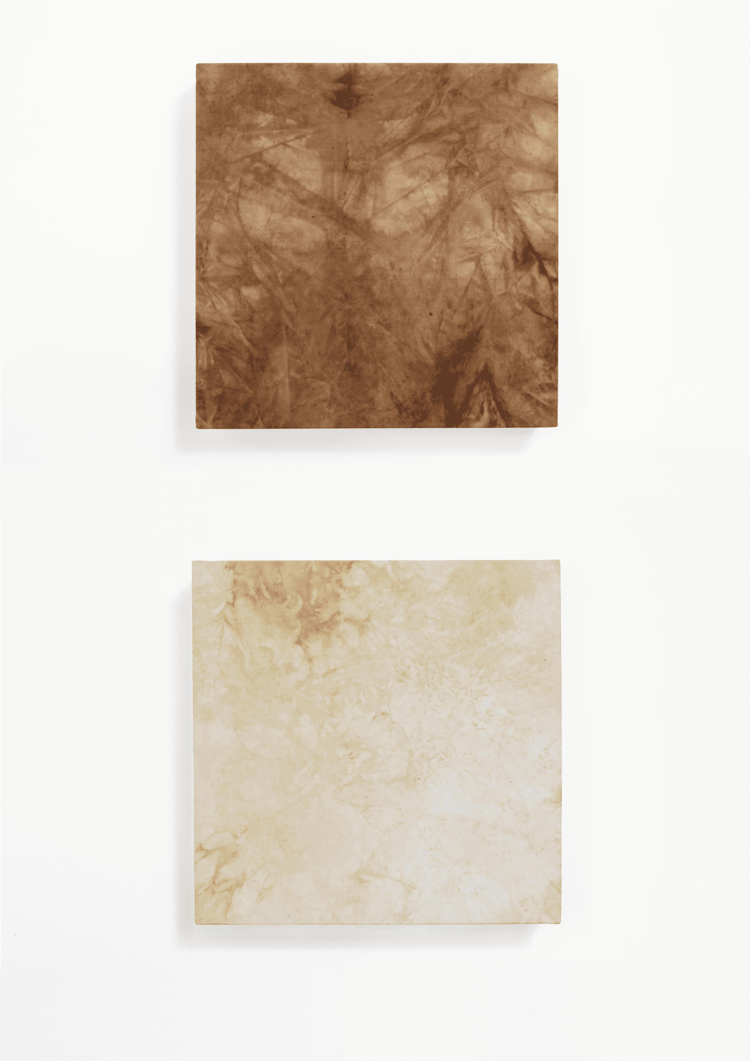 Gaia Bellini, Sindoni vegetali. Dittico a Marsia