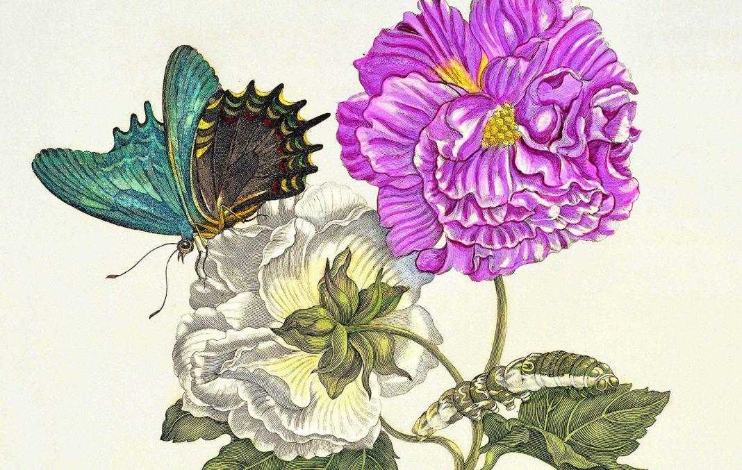 l'arte botanica nei secoli